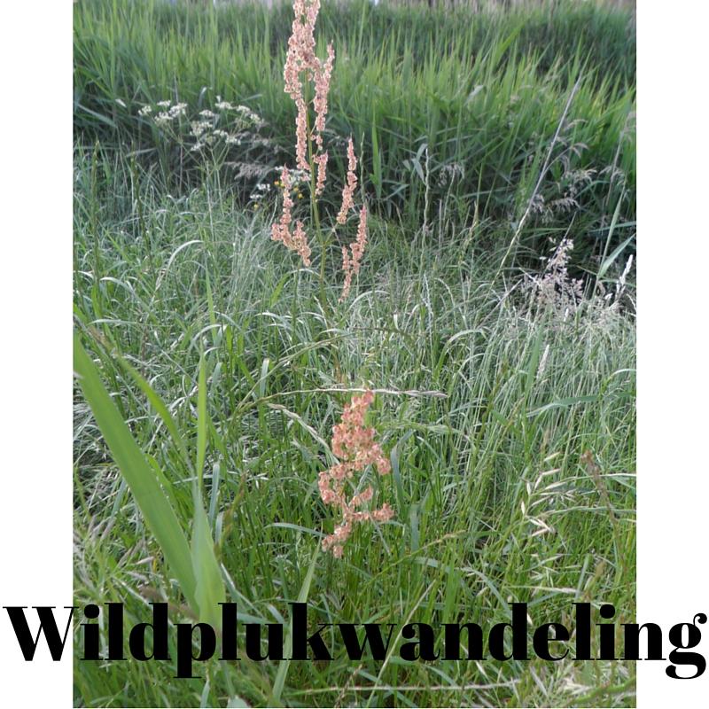 Wildplukwandeling